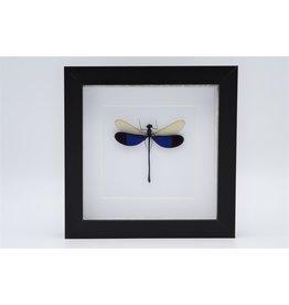 Nature Deco Blauwe libel in luxe 3D lijst