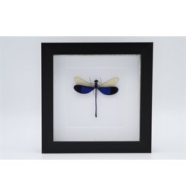 Nature Deco Blue dragonfly in luxury 3D frame