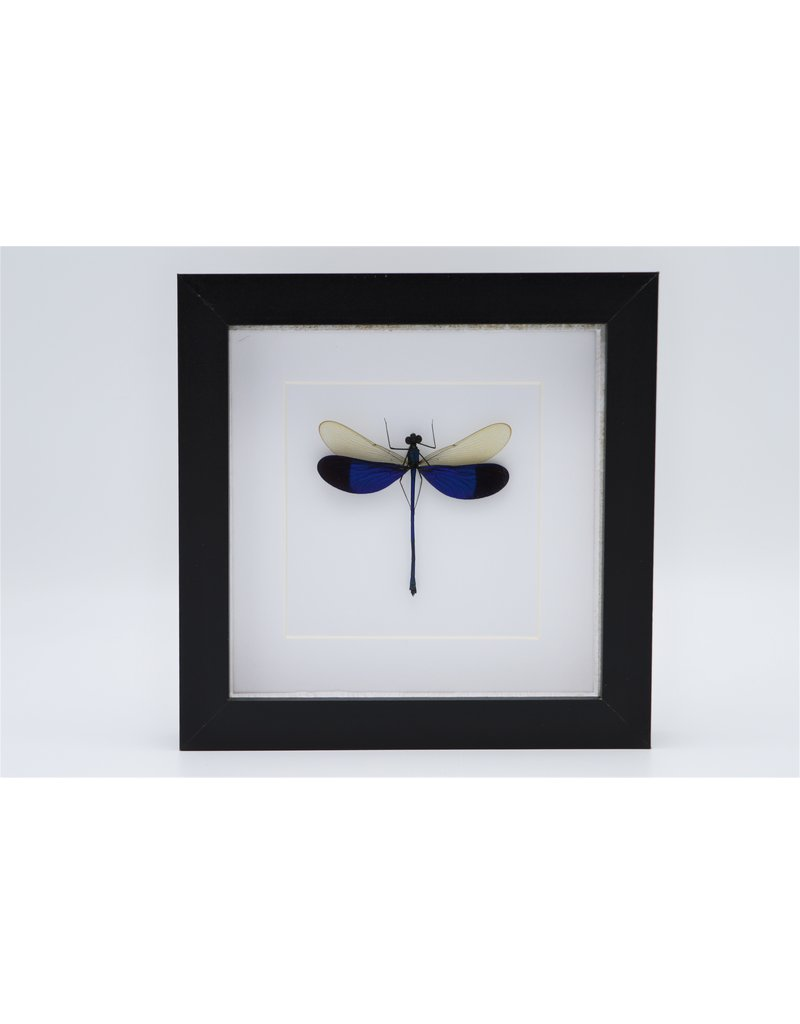 Nature Deco Blue dragonfly in luxury 3D frame 17 x 17cm