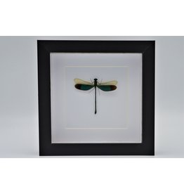 Nature Deco Green dragonfly in luxury 3D frame