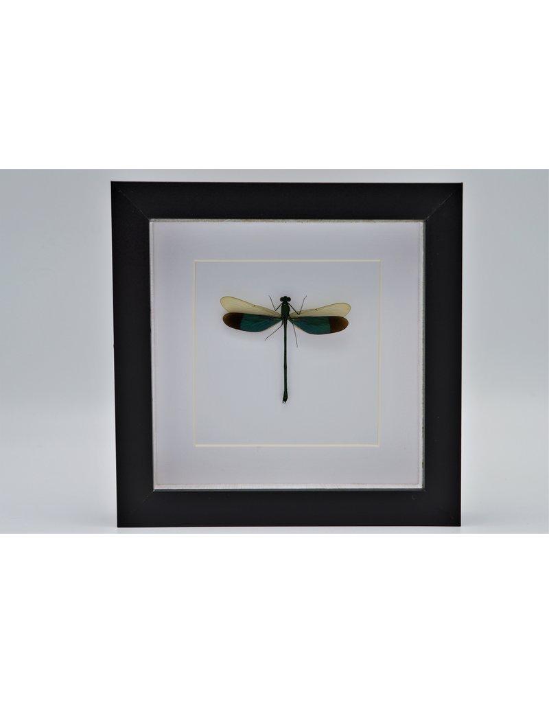 Nature Deco Groene libel in luxe 3D lijst 17 x 17cm