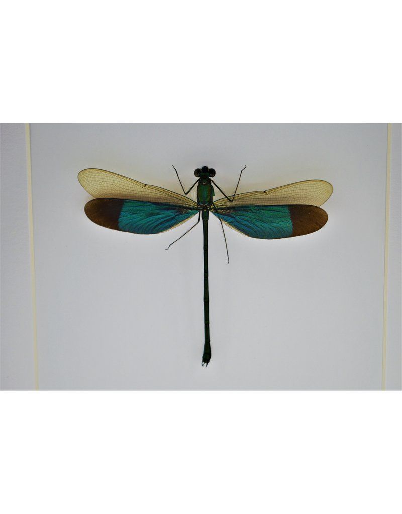Nature Deco Green dragonfly in luxury 3D frame 17 x 17cm