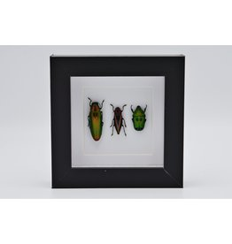 Nature Deco Beetle trio in luxury 3D frame