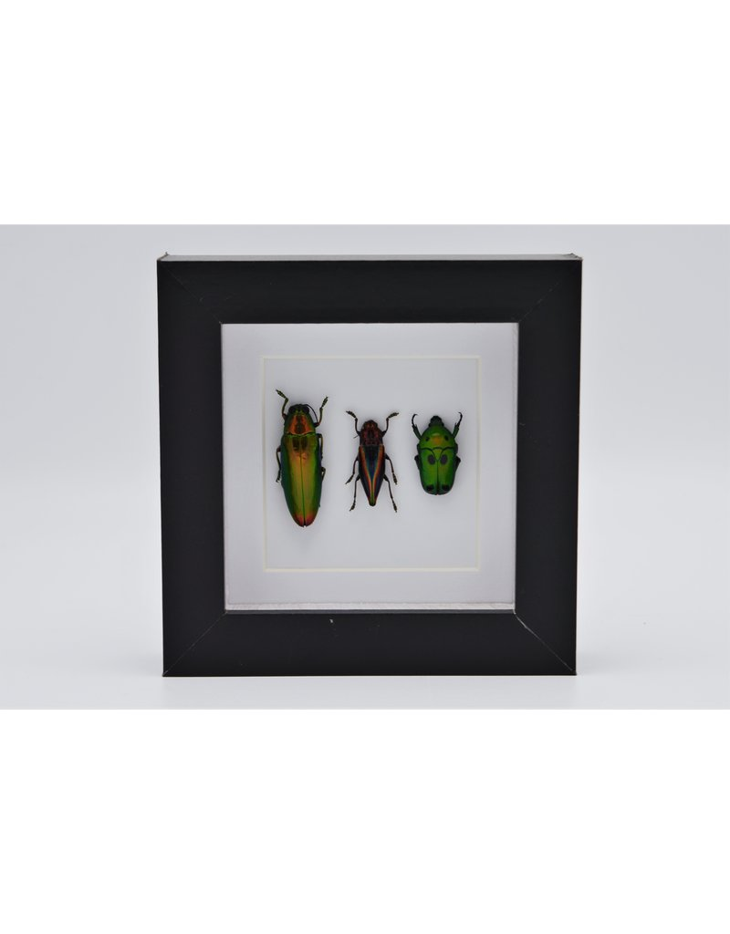 Nature Deco Beetle trio in luxury 3D frame 12 x 12cm