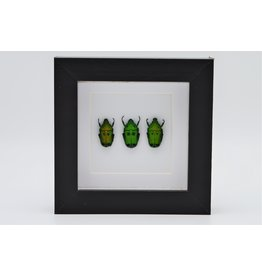 Nature Deco Green beetles in luxury 3D frame