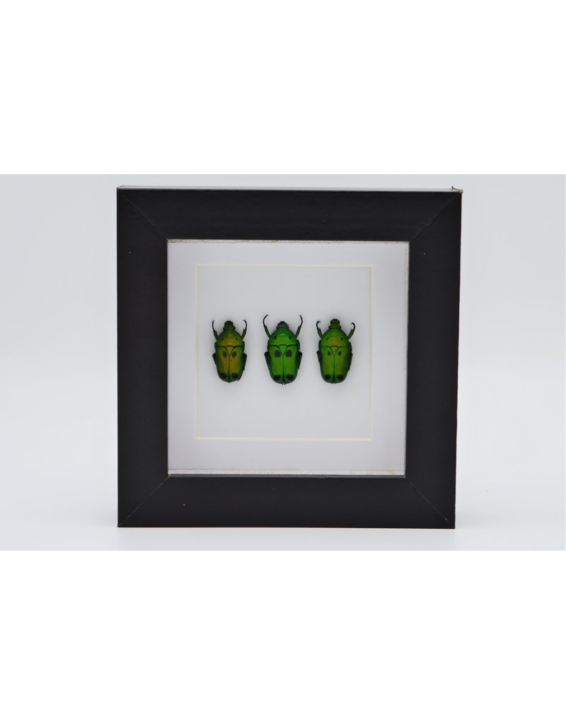 Nature Deco Green beetles in luxury 3D frame 12 x12cm