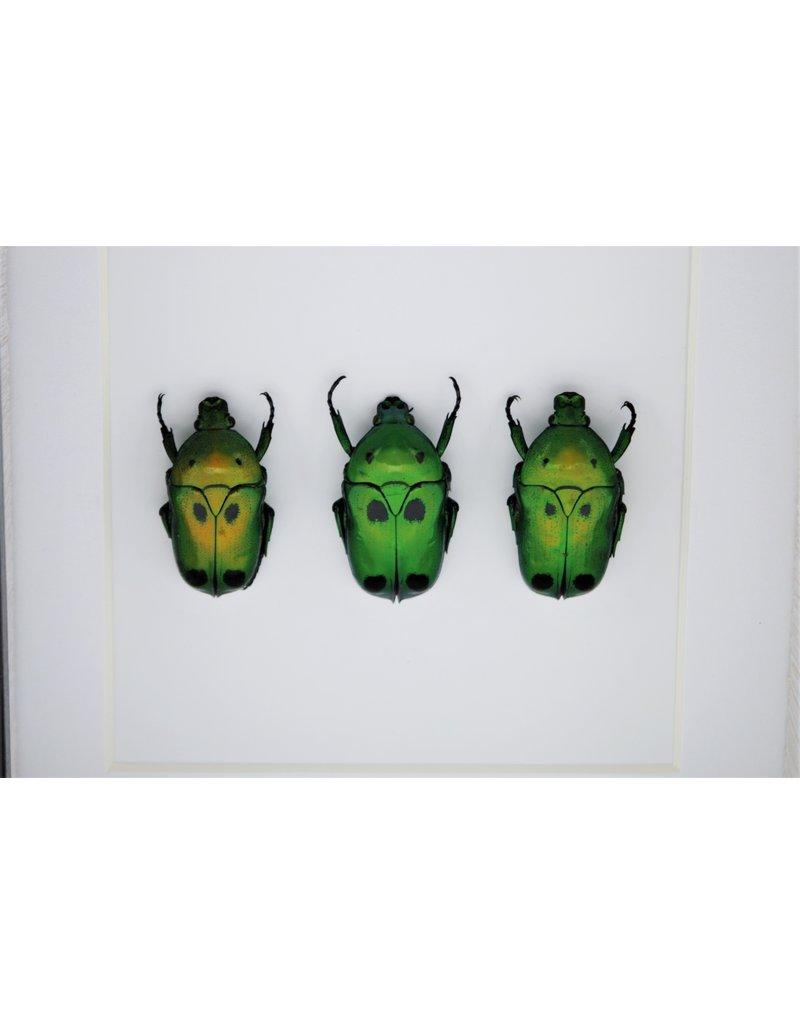 Nature Deco Groene kevers in luxe 3D lijst 12 x 12cm
