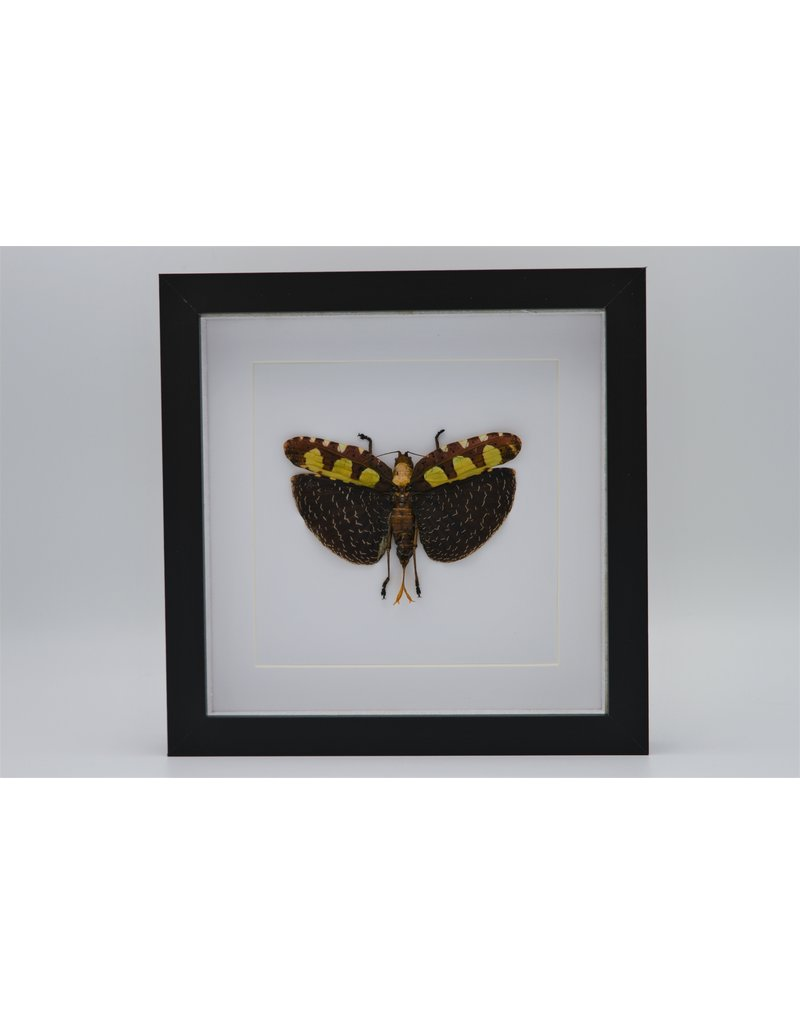 Nature Deco katydid in luxury 3D frame 22 x 22cm