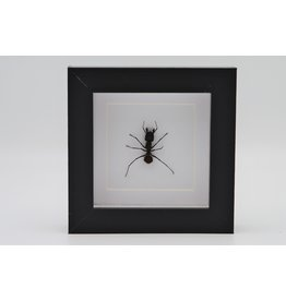 Nature Deco Bullet ant in luxury 3D frame