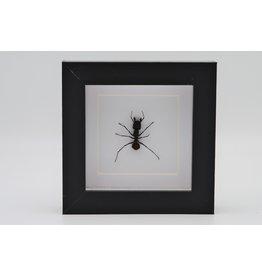 Nature Deco Kogelmier  in luxe 3D lijst