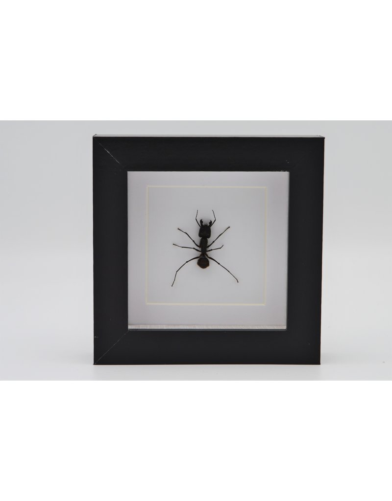 Nature Deco Kogelmier  in luxe 3D lijst 12 x 12cm