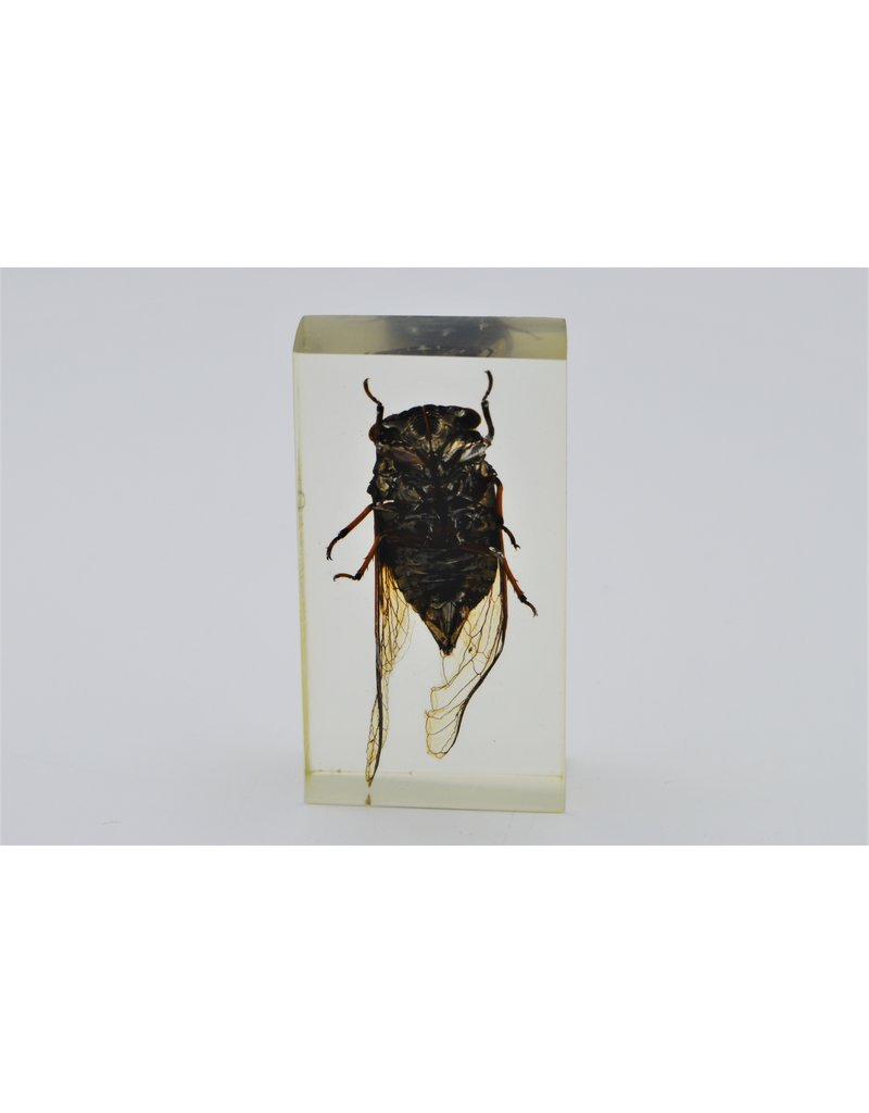 . Insect in hars #1 7 x 4cm