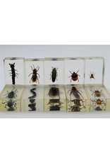 . Insect in resin #7 7 x 4cm
