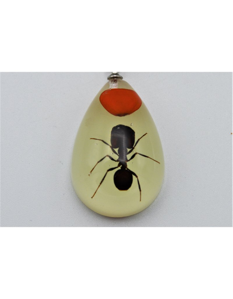 . Insects keychain #6