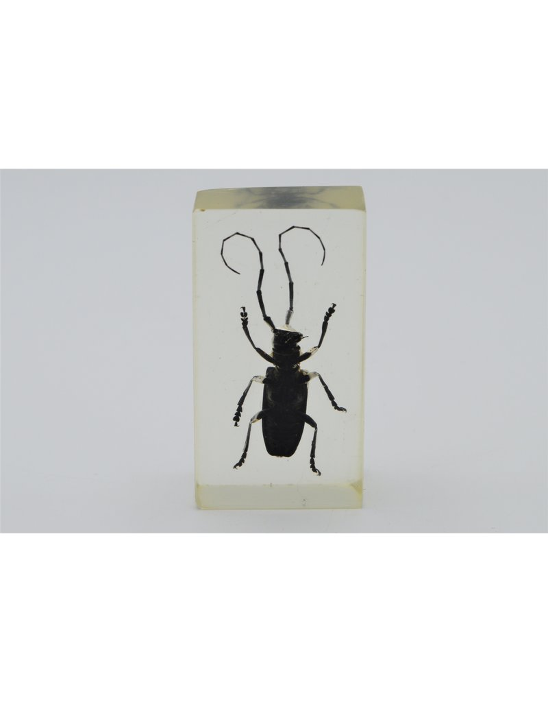 . Insect in hars #10  7 x 4cm