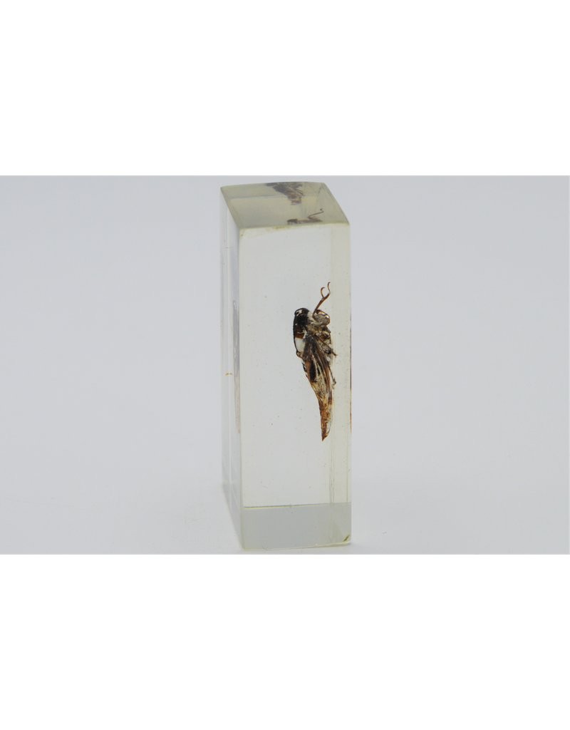 . Insect in resin #1 7 x 4cm