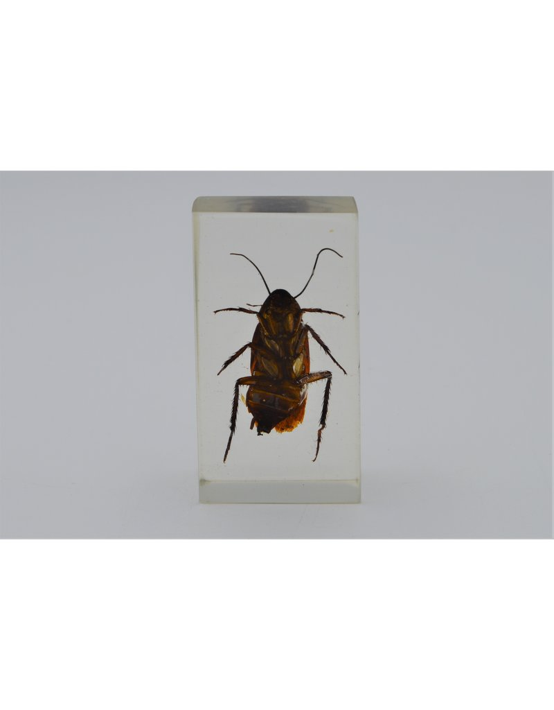 . Insect in resin #14 7 x 4cm