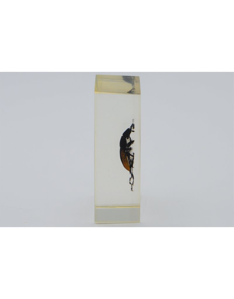 . Insect in hars #17 7 x 4cm