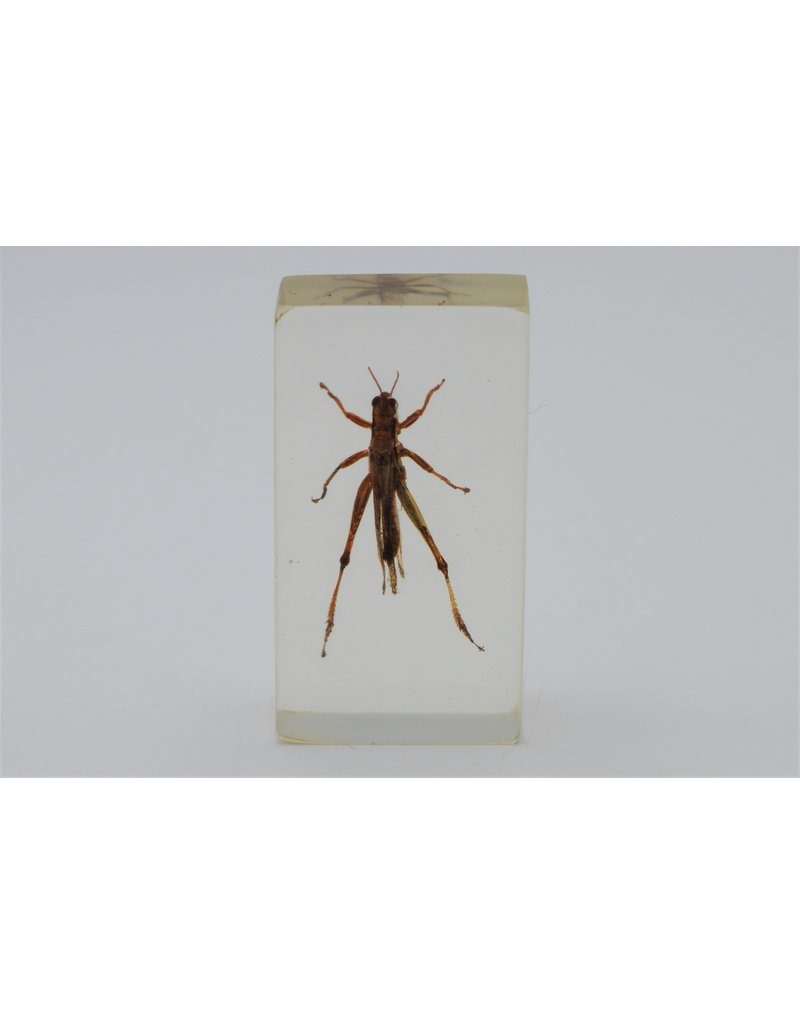 . Insect in resin #20 7 x 4cm