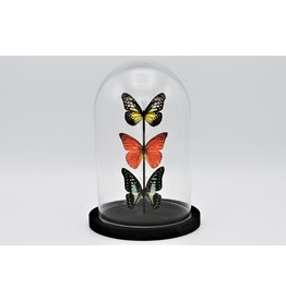 Nature Deco Glass dome with 3 butterflies