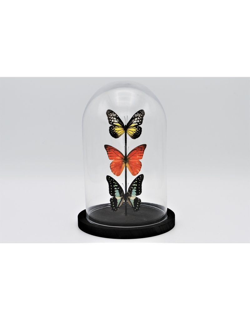 Nature Deco Glass dome with 3 butterflies 21 x 14cm