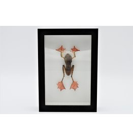 Nature Deco Frog in 3D frame