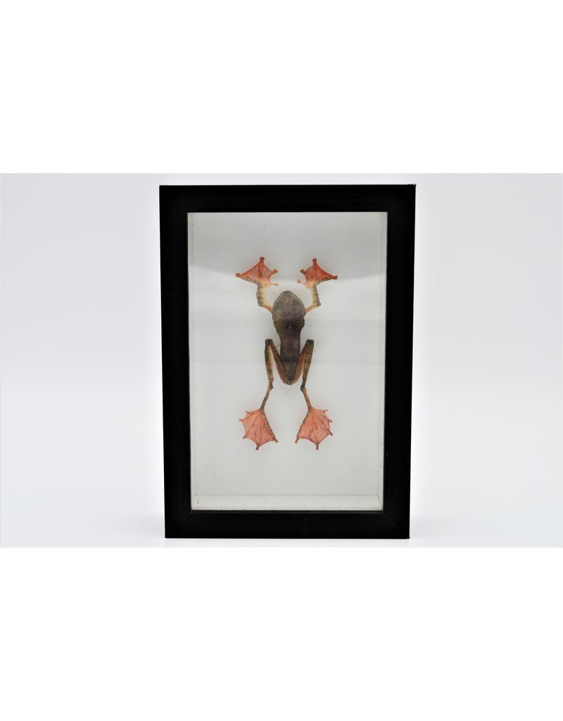 Nature Deco Frog in 3D frame 11,5 x 16,5cm