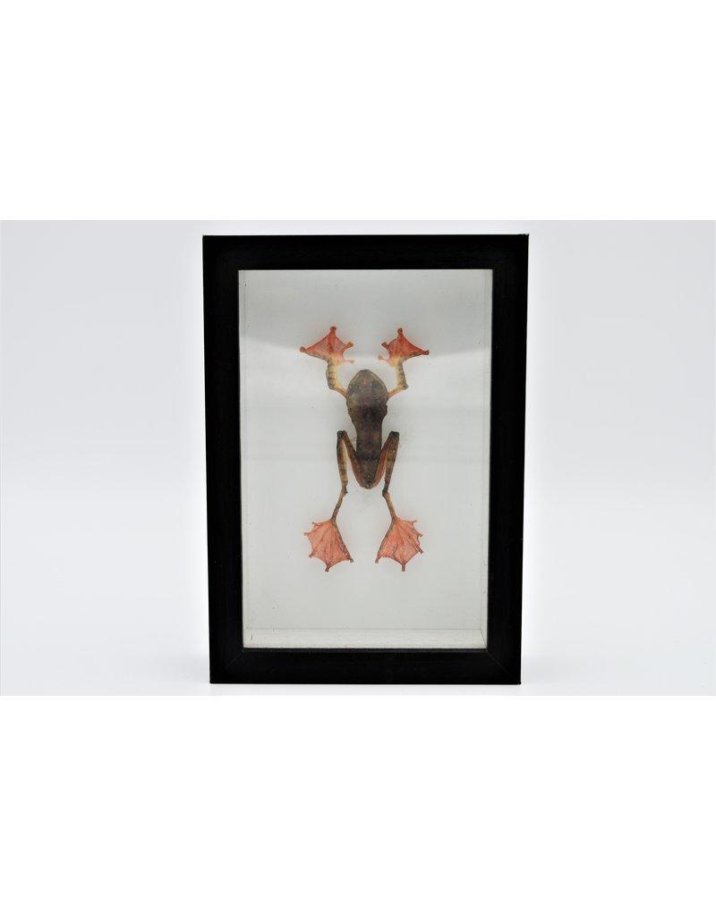 Nature Deco Kikker in 3D lijst 11,5 x 16,5cm
