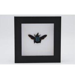 Nature Deco Blauwe bij in luxe 3D lijst