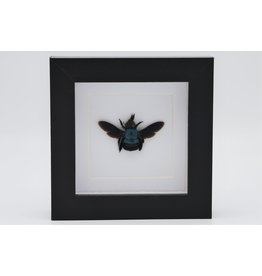 Nature Deco Blue bee in luxury 3D frame