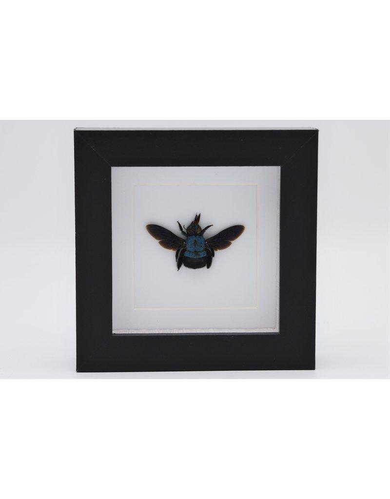 Nature Deco Blauwe bij in luxe 3D lijst 12 x 12cm