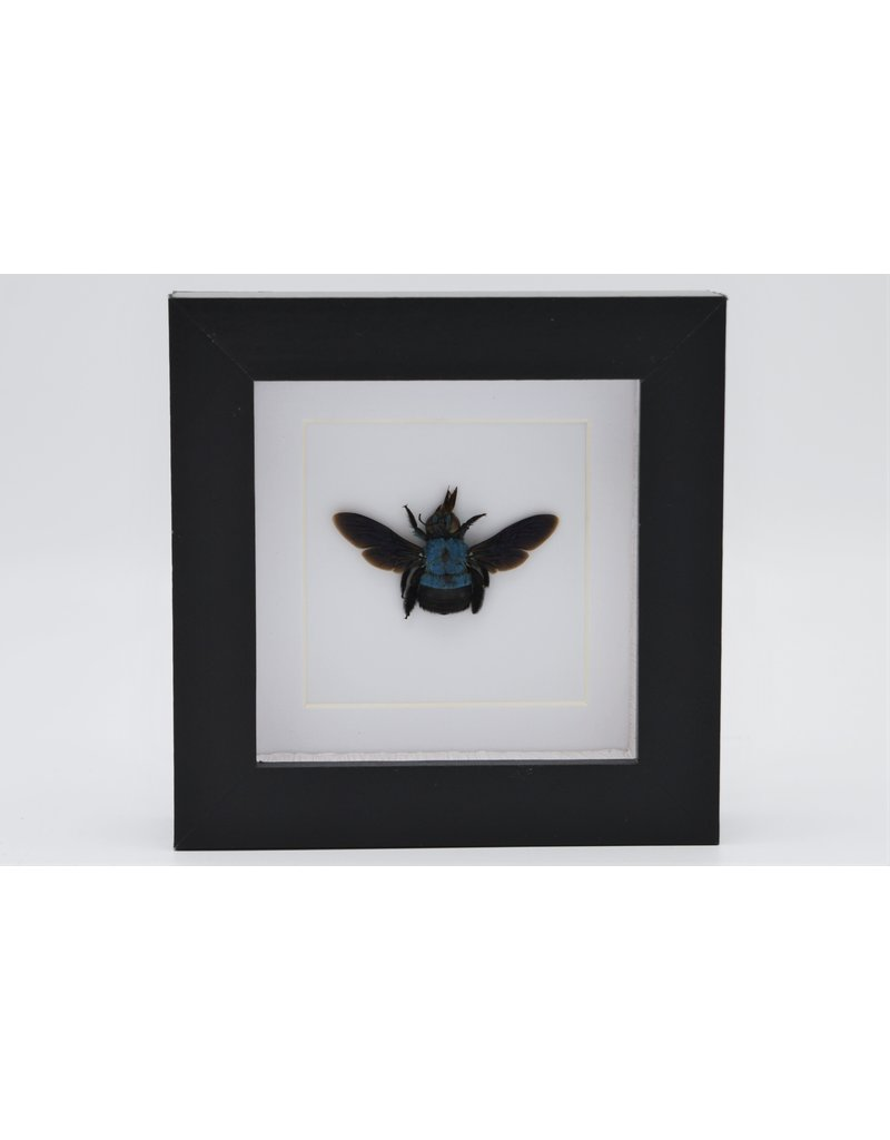 Nature Deco Blue bee in luxury 3D frame 12 x 12cm