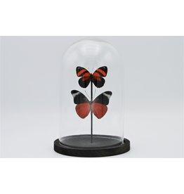 . Stolp met 2 rode vlinders