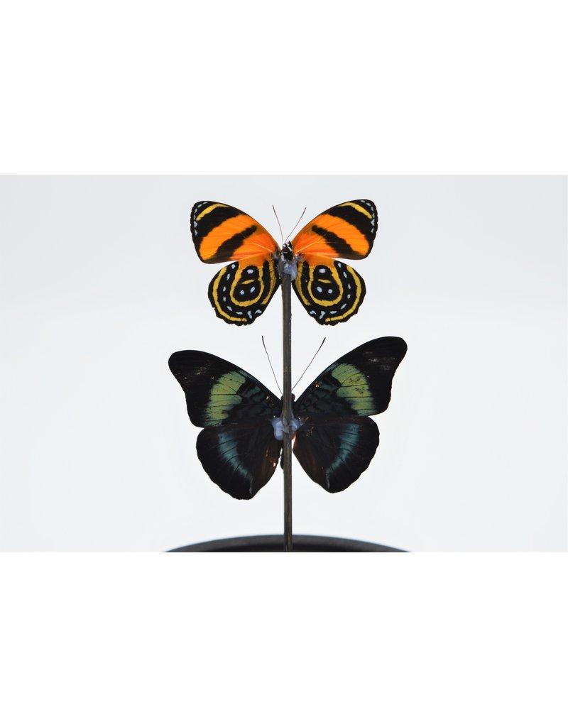 . Stolp met 2 rode vlinders 21 x 14cm