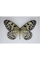 Nature Deco Idea Leuconoe in luxury 3D frame 22 x 22cm