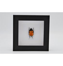 Nature Deco Man face bug in luxury 3D frame