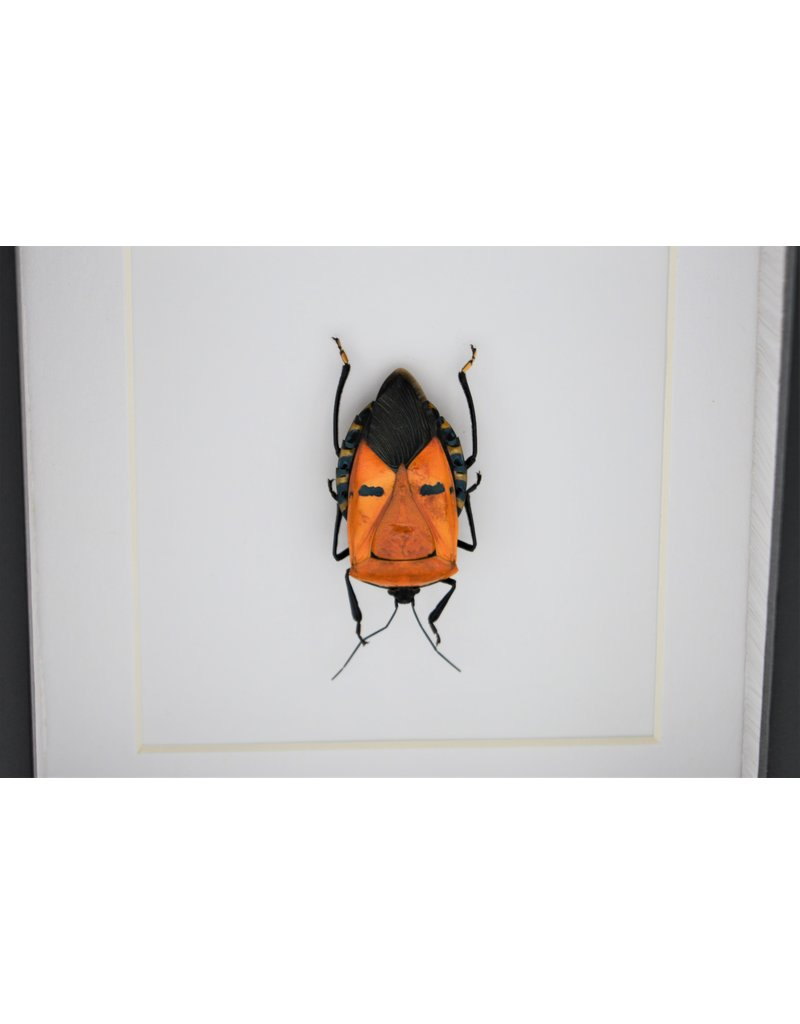 Nature Deco Man face bug in luxe 3D lijst 12 x 12cm