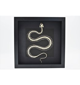 Nature Deco Snake skeleton in 3D frame