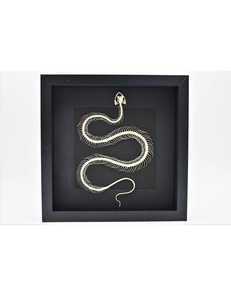Nature Deco Snake skeleton in 3D frame 25,5 25,5cm