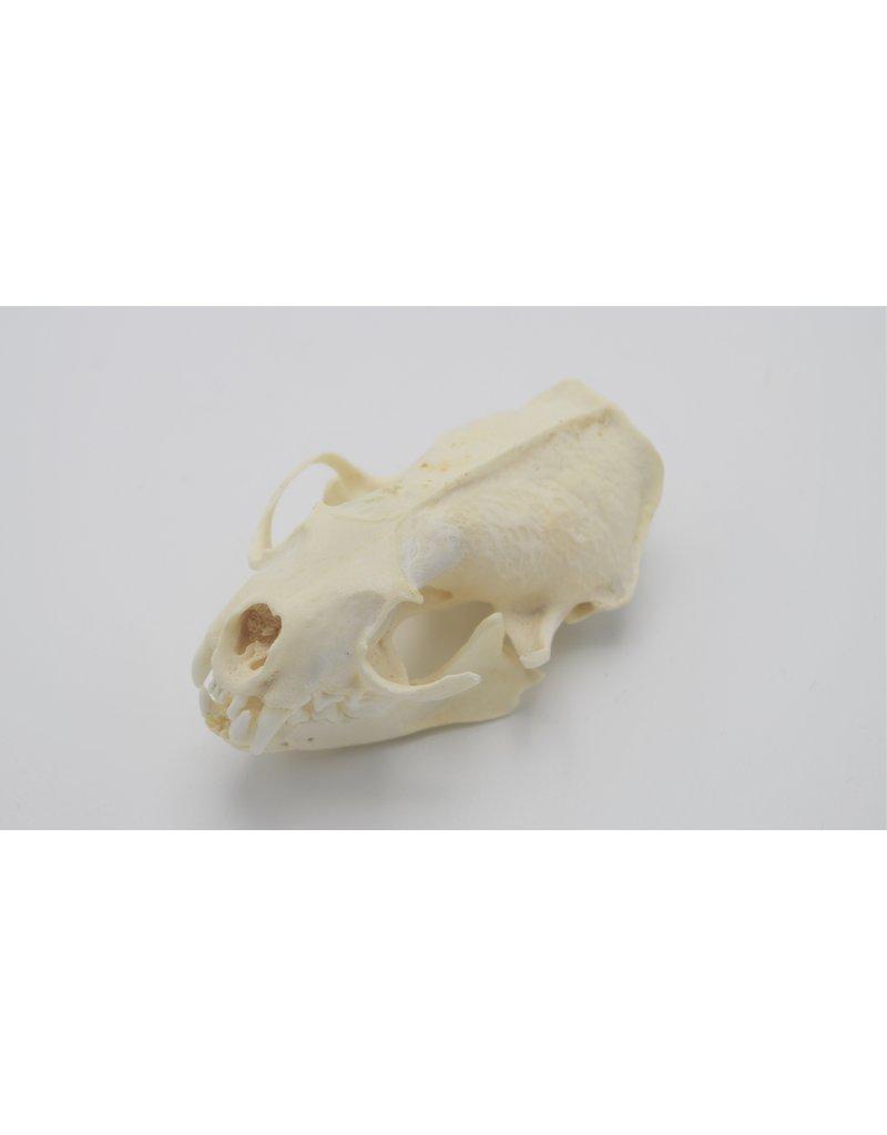 . Mink skull B edition
