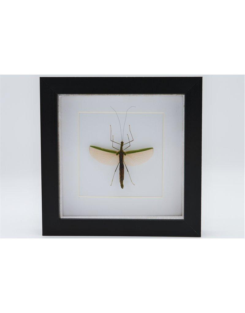 Nature Deco Wandelende tak in luxe 3D lijst  17 x 17cm (vrouw)