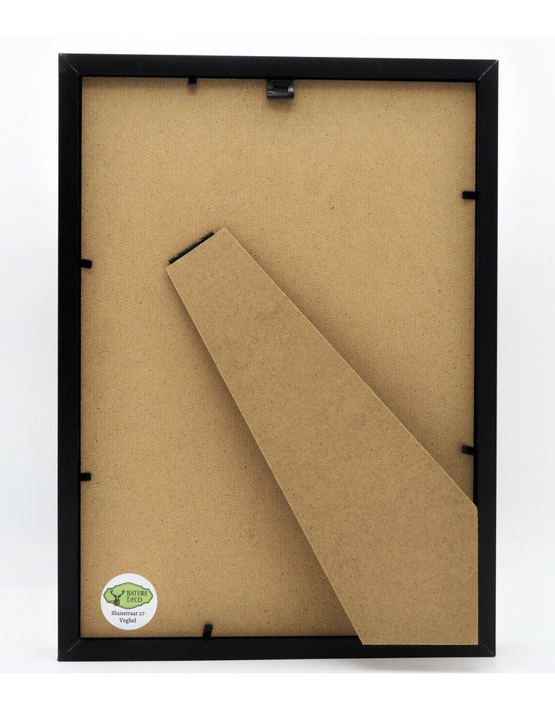 Nature Deco Argema Mittrei in luxe 3D lijst 32 x 23,5cm (man)