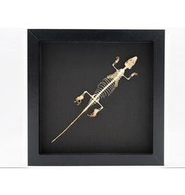 Nature Deco Skink skelet in luxe 3D lijst
