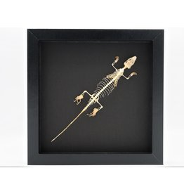 Nature Deco Skink skeleton in luxury 3D frame