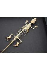 Nature Deco Skink skeleton in luxury 3D frame 22 x 22cm