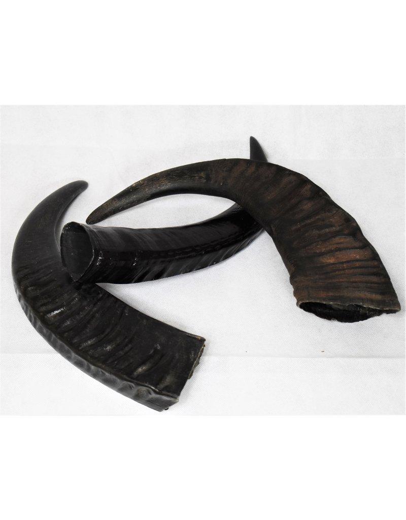 . Water buffalo horn