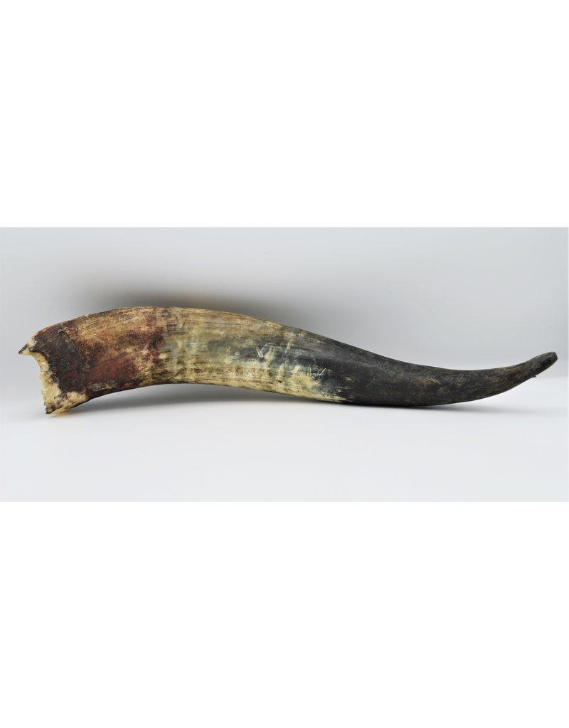 . Watusi horn