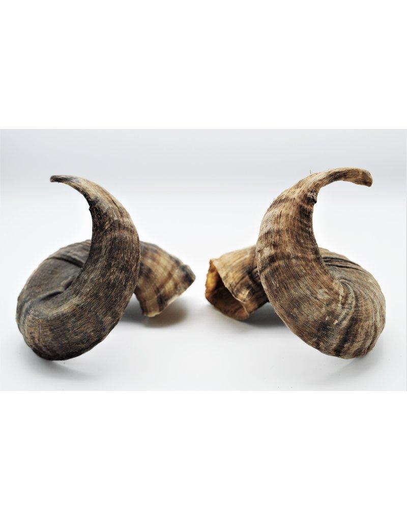 . Ouessant schaap hoorns set donker