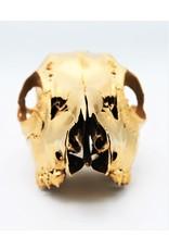 . Ree schedel goud