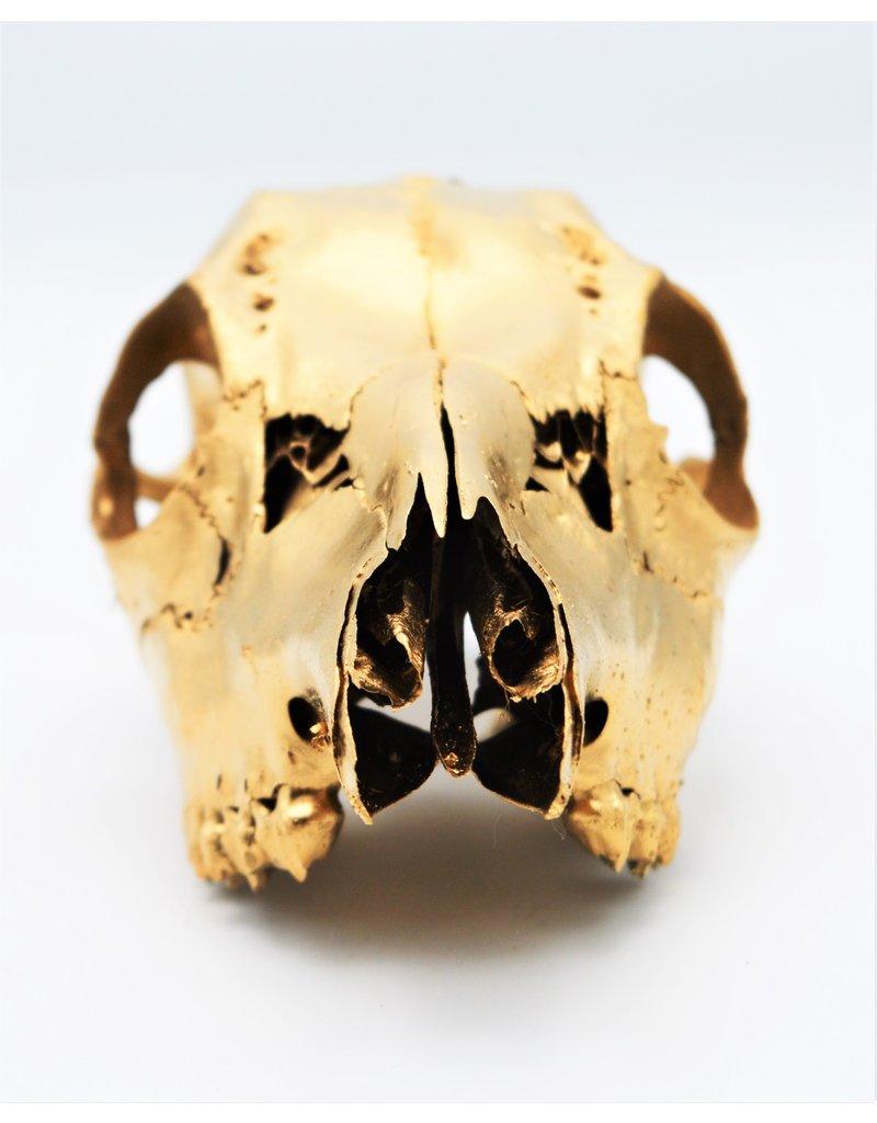 . Roe skull gold